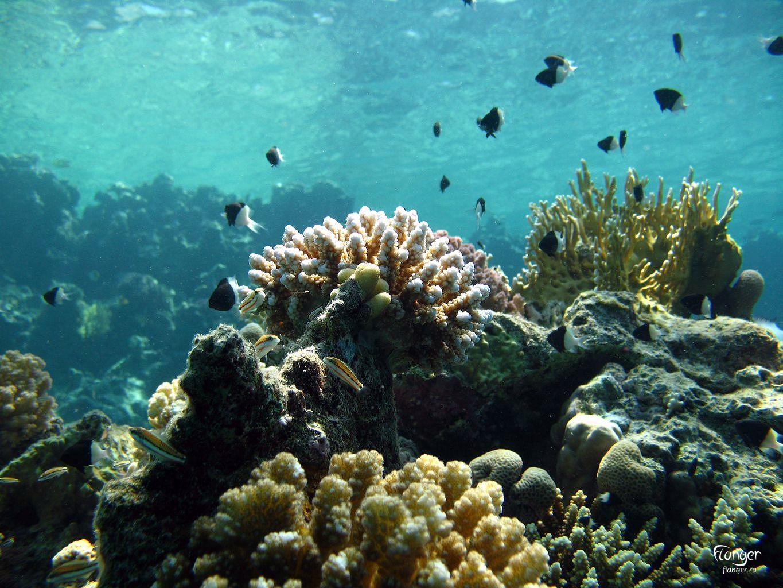 Scuba Diving – Pemba, Mozambique.